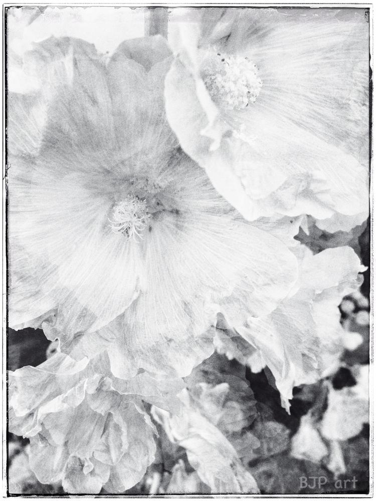 Zweimal Blütentraum – mit Sonnt - bringfried | ello