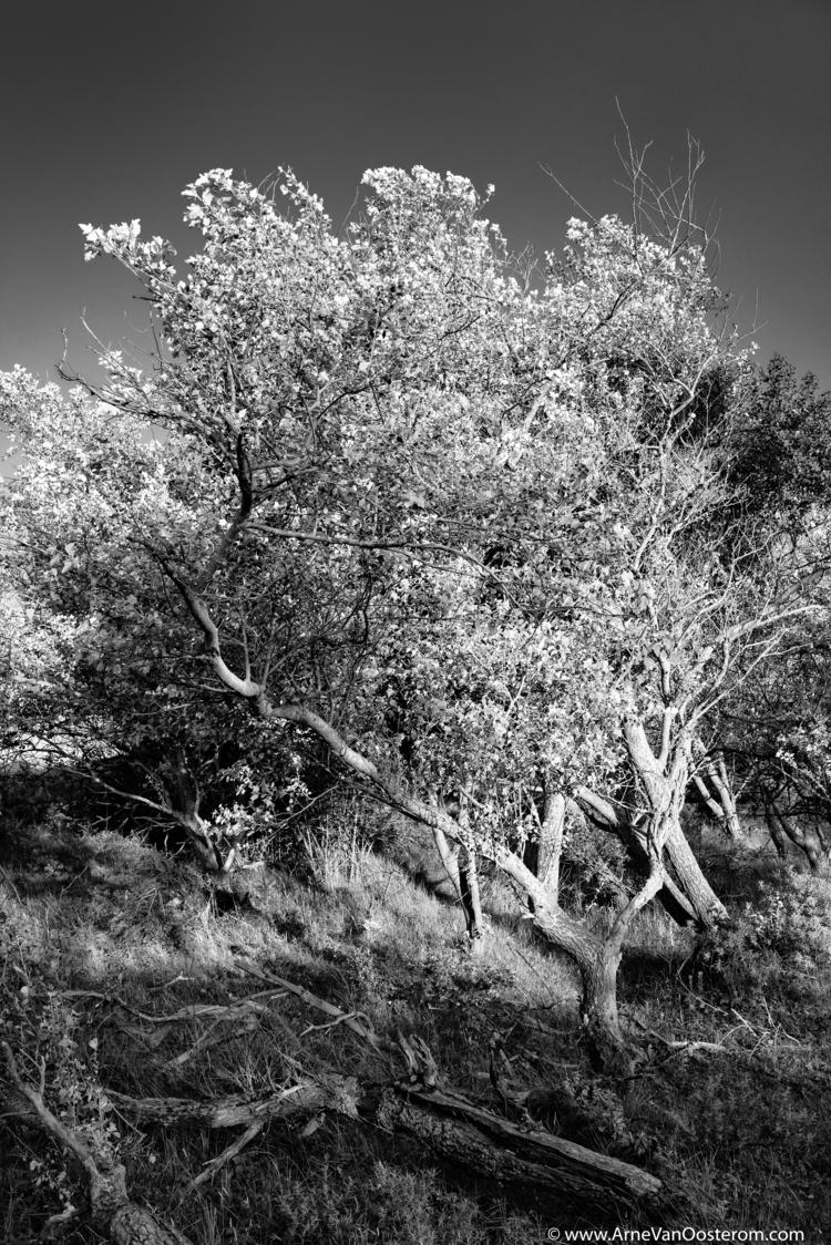 Project Dunes - kennemerduinen, photography - arnevanoosterom   ello