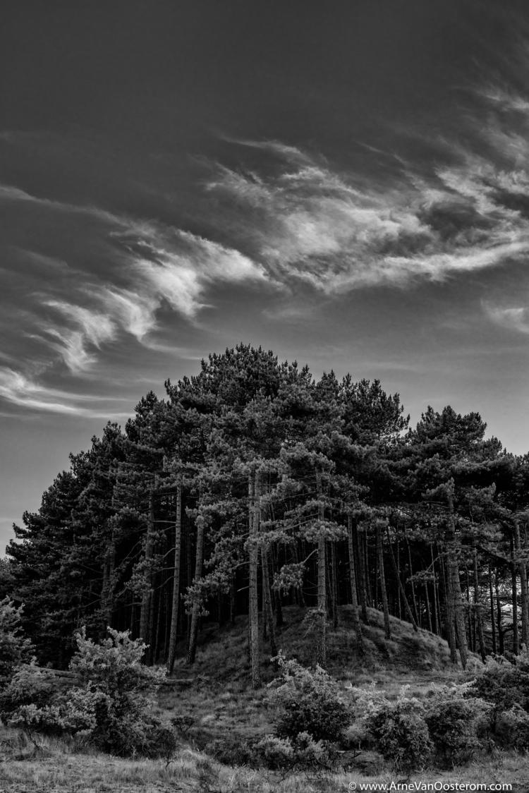 Project Dunes - kennemerduinen, photography - arnevanoosterom | ello