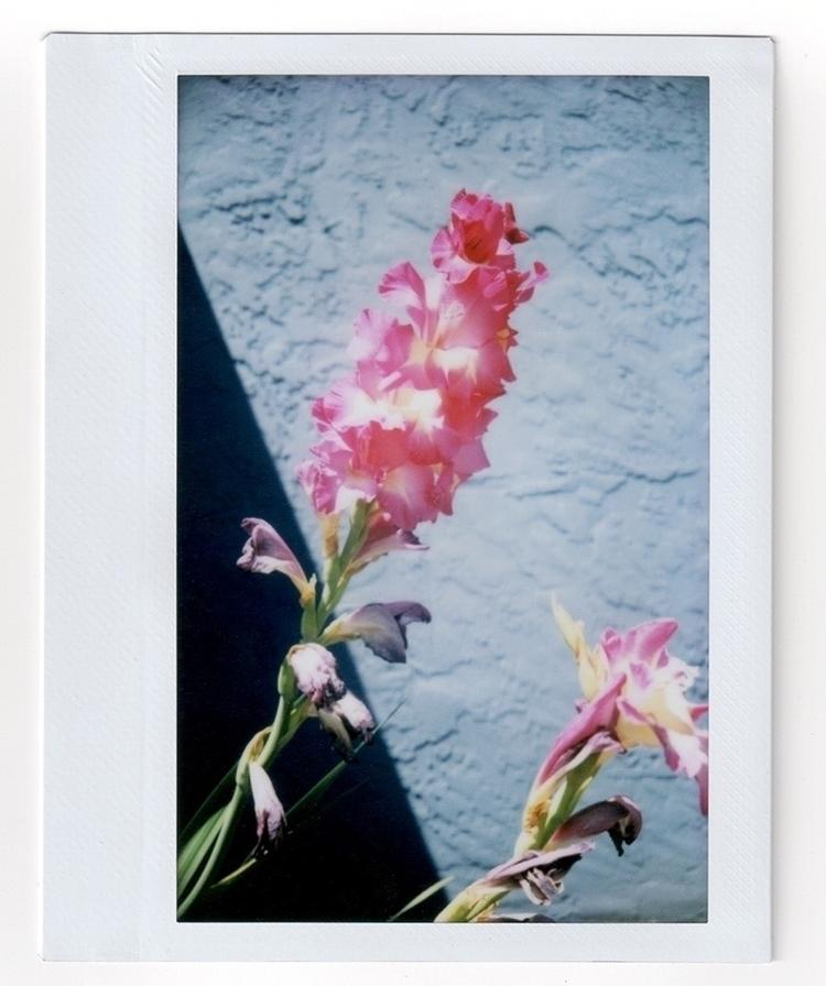 instax, instantfilm, gladiolus - laurajohnstonart | ello