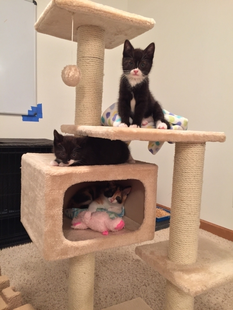 crop foster kittens Greenhill H - nagnagnag | ello