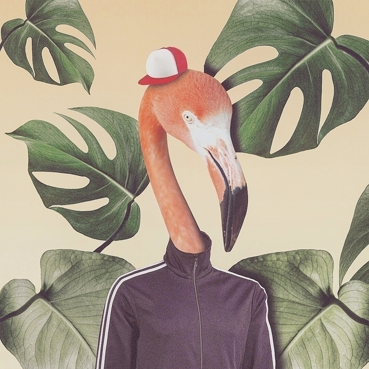 Mingo le Flamingo ============= - valenvq | ello