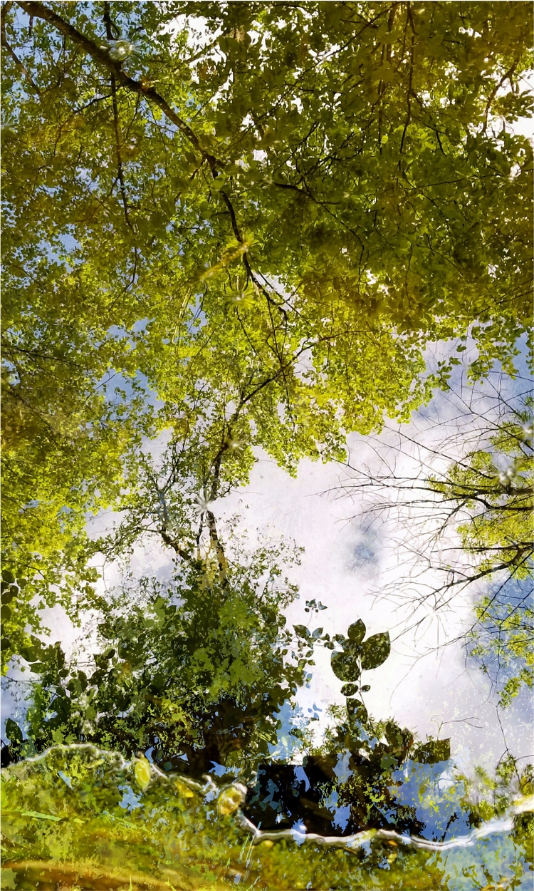 art, photoremix, pond, trees - paulsmedberg | ello