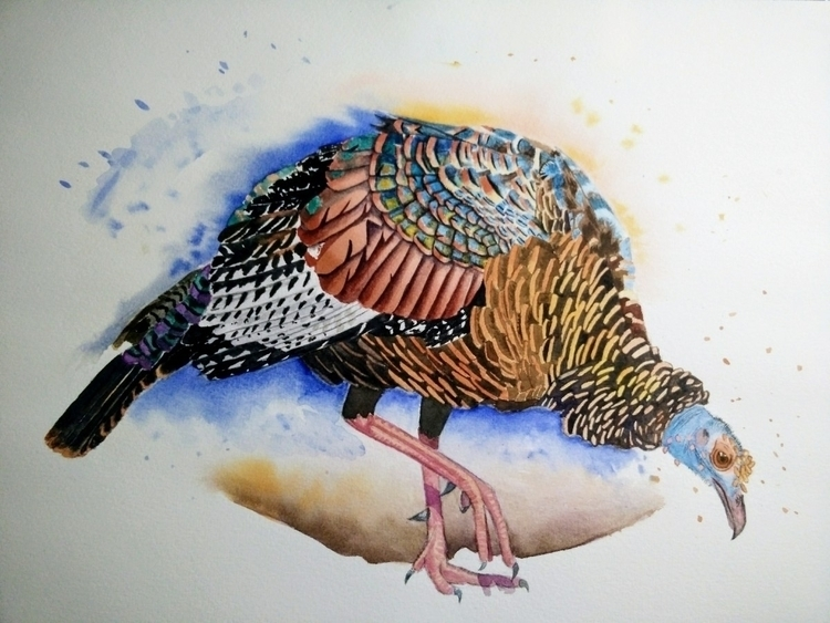 occelated turkey - watercolor., faunafocas - clarrydoll | ello