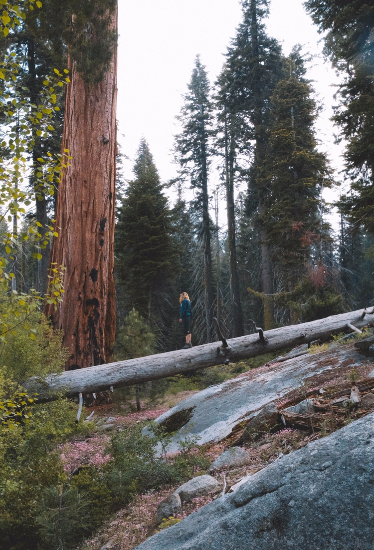 Sequoia National Park | Califor - toriamia | ello