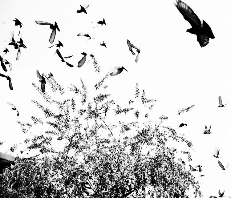 Birds Flight. Johannesburg, 201 - marcolongari | ello