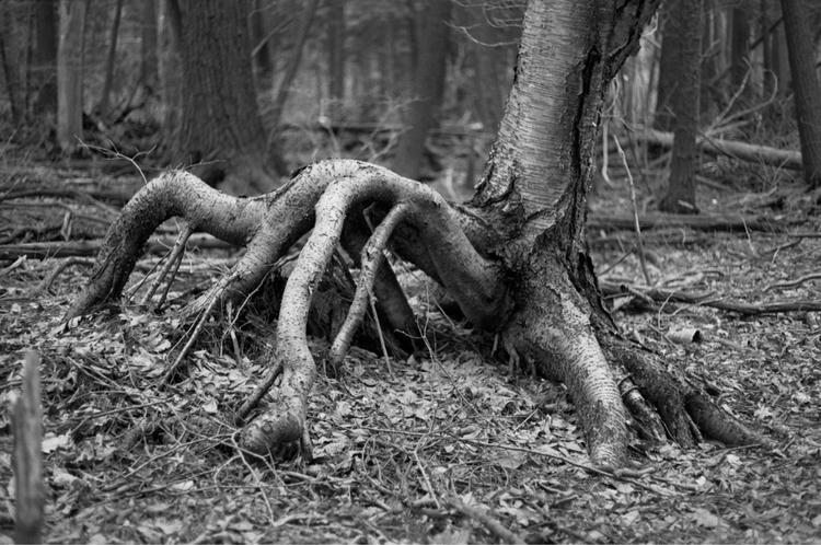 roots, film - lipthin | ello