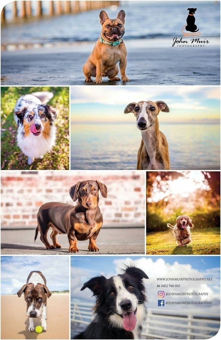 bit promo poster love :grin - petphotographer - johnmuirphotography | ello