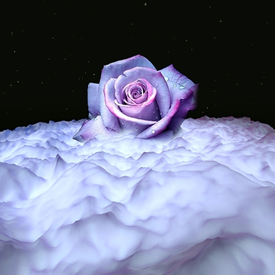 flower, rose, cinema4D, 3D, graphicdesign - cattina_elettroshock | ello