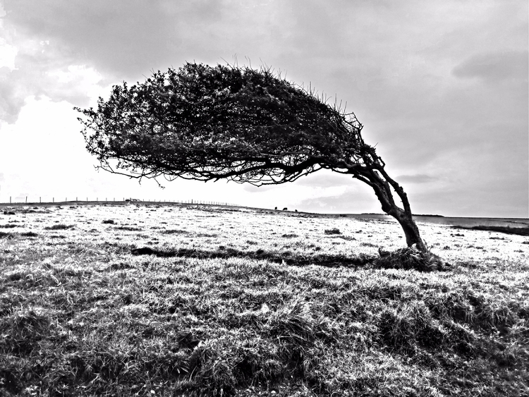 slightly surreal windblown tree - notabene | ello