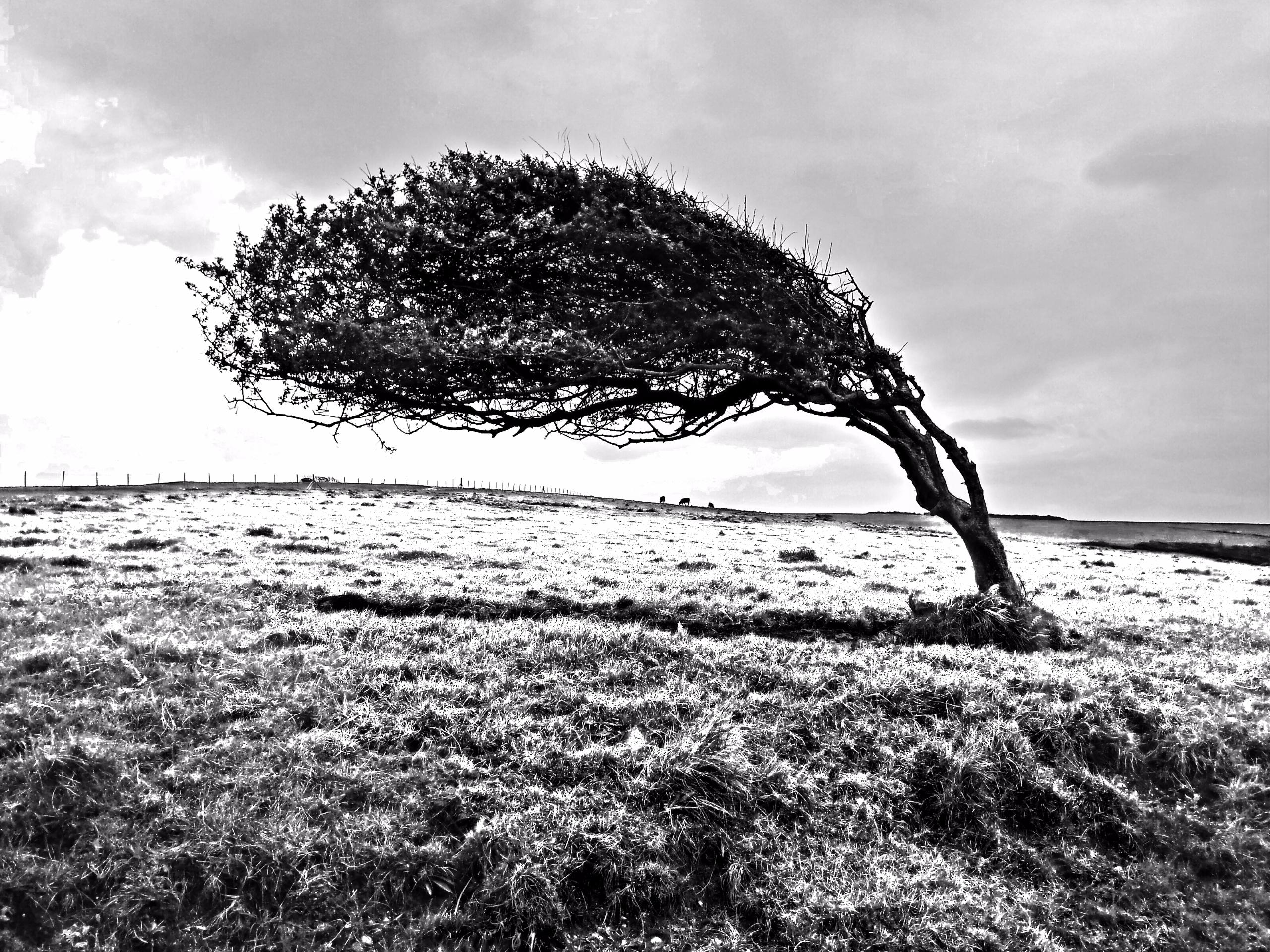 slightly surreal windblown tree - notabene | ello