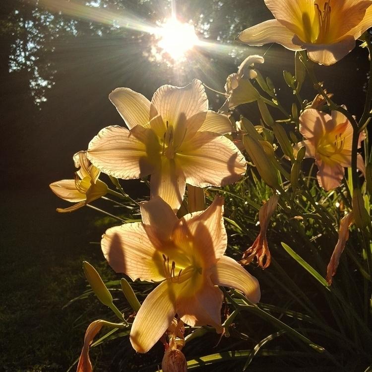 Watching Sun set waiting Moonri - grayvervain | ello