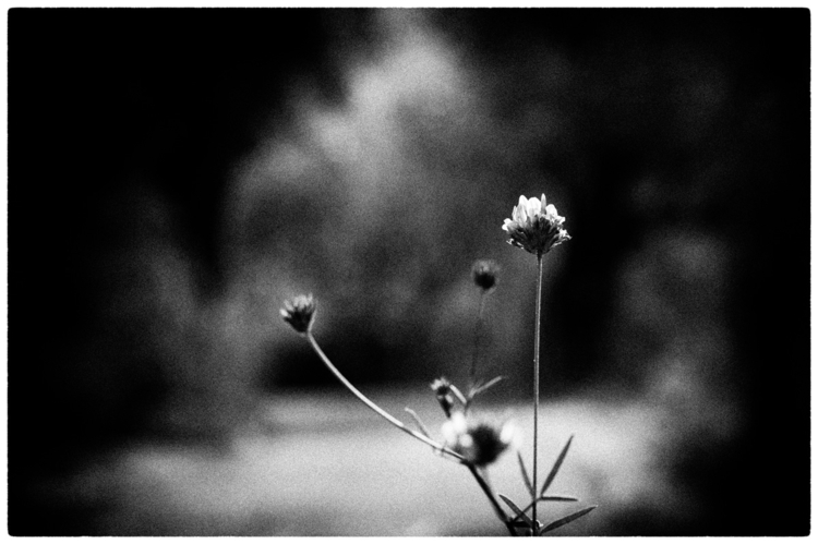 UNITED death tear - photography - delafoi | ello