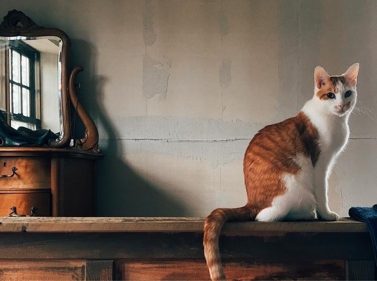 Equinox cat sitting perfect Nor - edward3 | ello