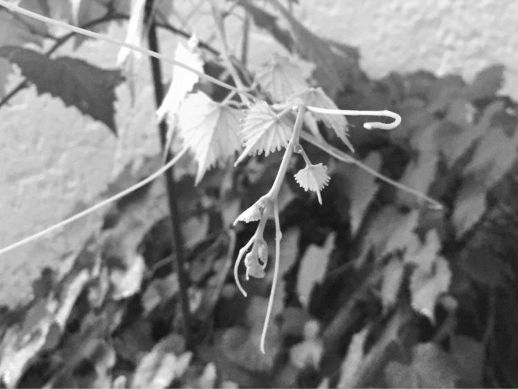 Attack Grape Tree Apps - mikefl99 - mikefl99   ello