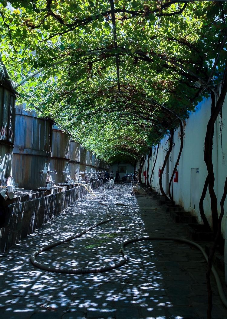 Parras de la Fuente, Coahuila - photography - gabifields   ello
