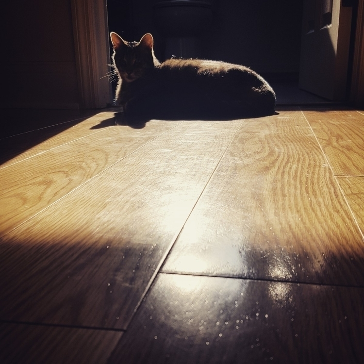 Resting shadows~:bust_in_silhou - grayvervain | ello