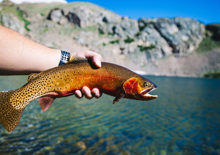 Killer cutties high hills - flyfishing - thinktomake | ello