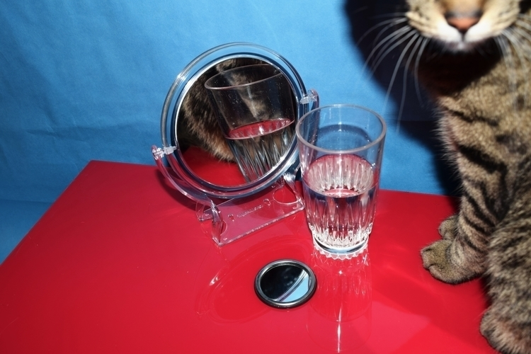 Pawing Photography - kitty, cat - jahnyawn | ello