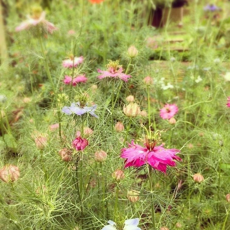 Meadow garden seed heads gorgeo - empyreane | ello