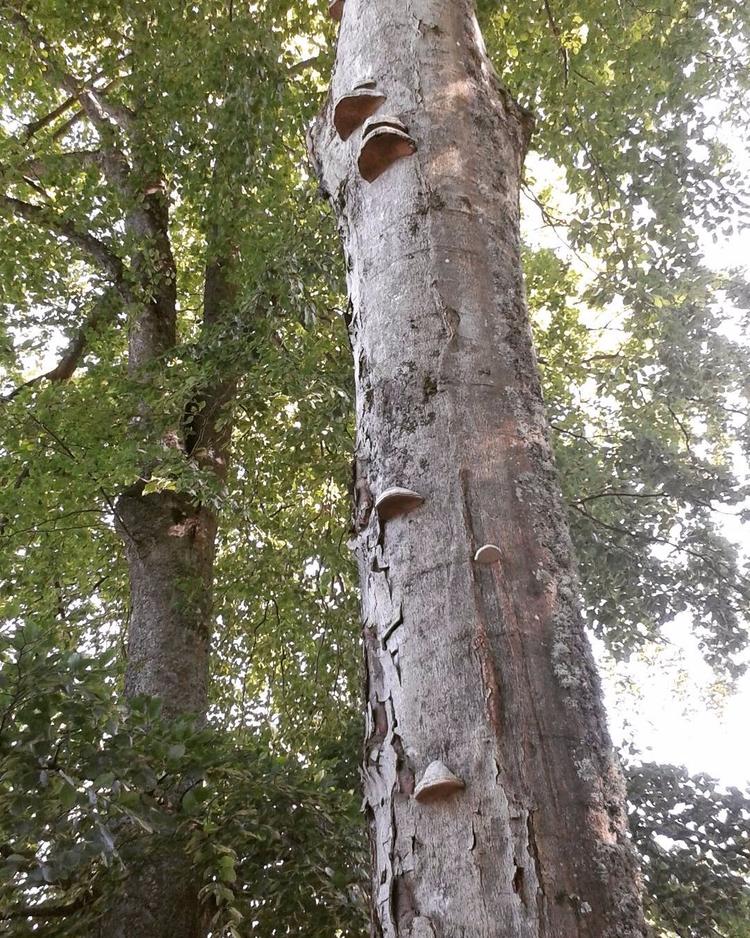 Några är inneboende på en Bok - Skogskyrkogardar.se - skogskyrkogardar   ello