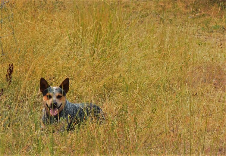Dogs life - amateur, photography - bekah_h | ello