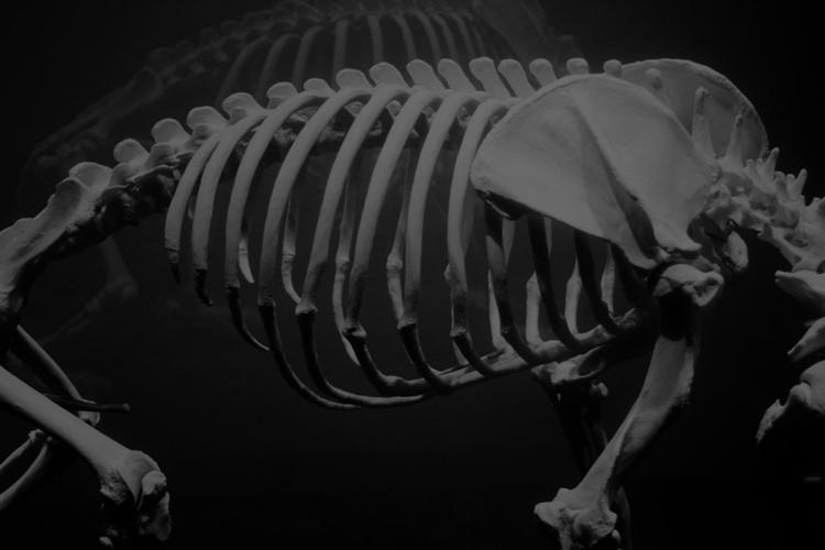 corpus_vertebrae Post 13 Jul 2017 01:36:10 UTC | ello