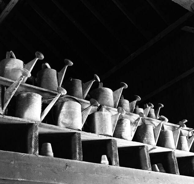 Watering Cans Karen Exiner - exinerartstudio | ello