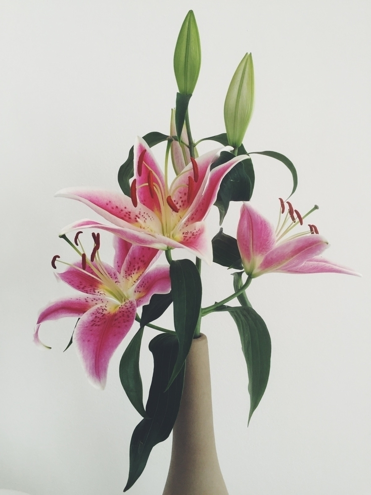lillies, flower, pink, bouquet - oliviaacar | ello