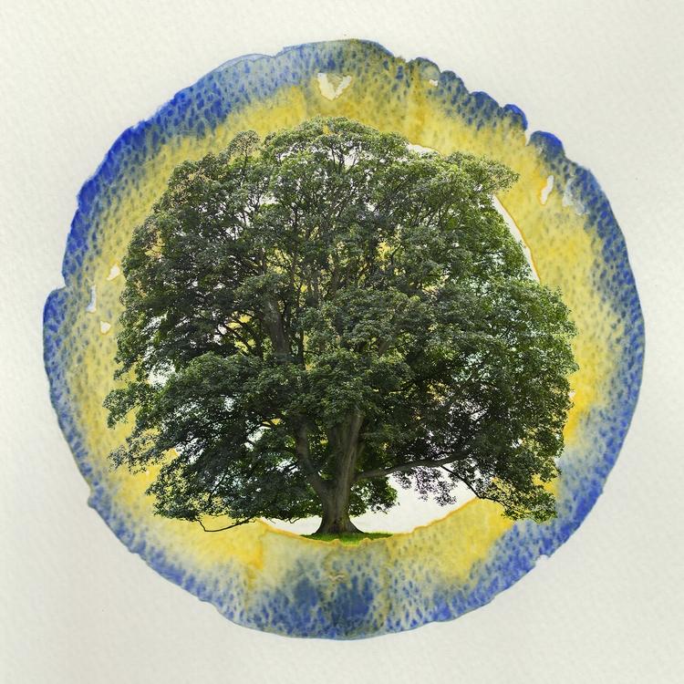 Tree target - bradverts | ello