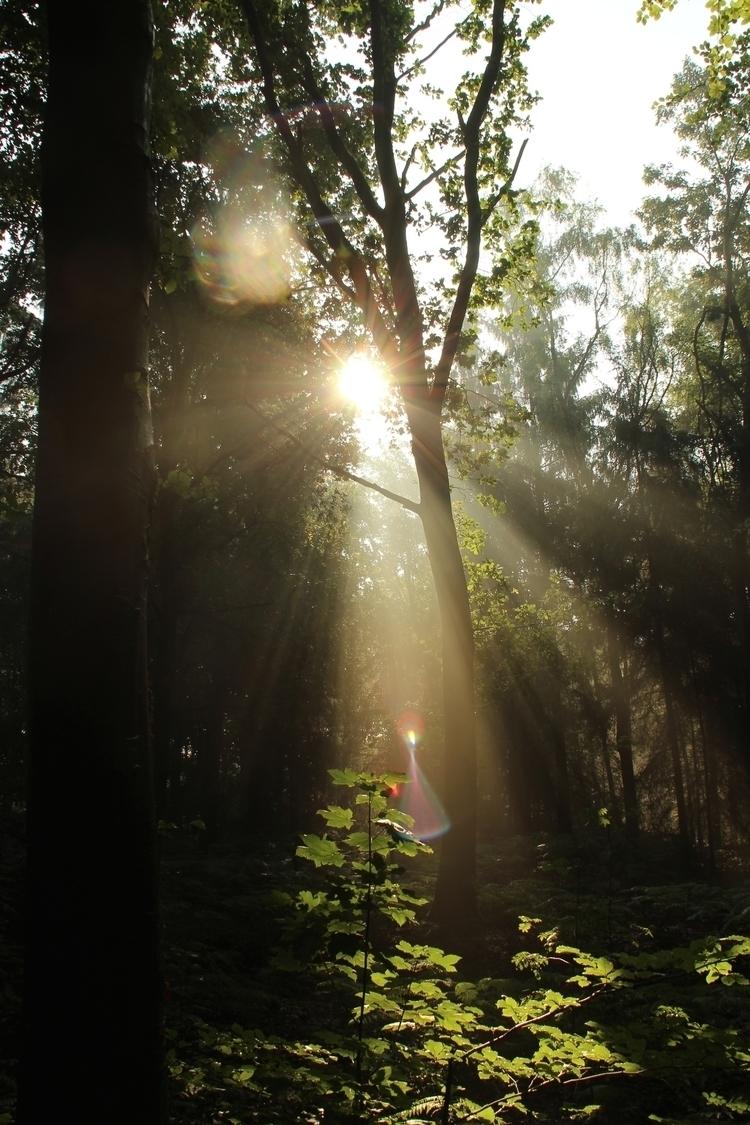 Renkum, Netherlands house - forest - annamigchels | ello