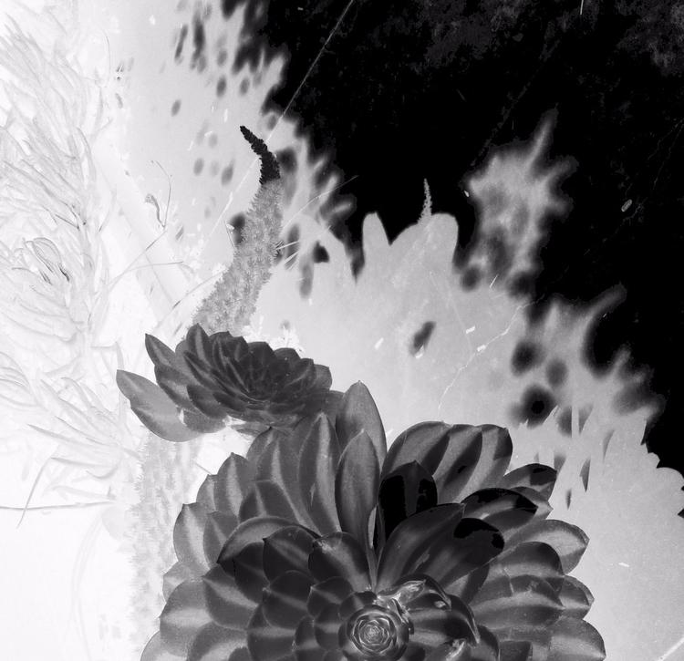 experimental glass photographic - voiceofsf | ello