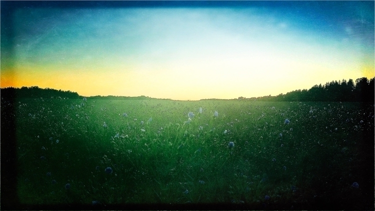 Colour blue - field, flowers, colours - yogiwod | ello