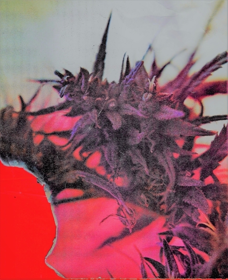 cannabis, ellocannabis, vintage - ellocannabis | ello