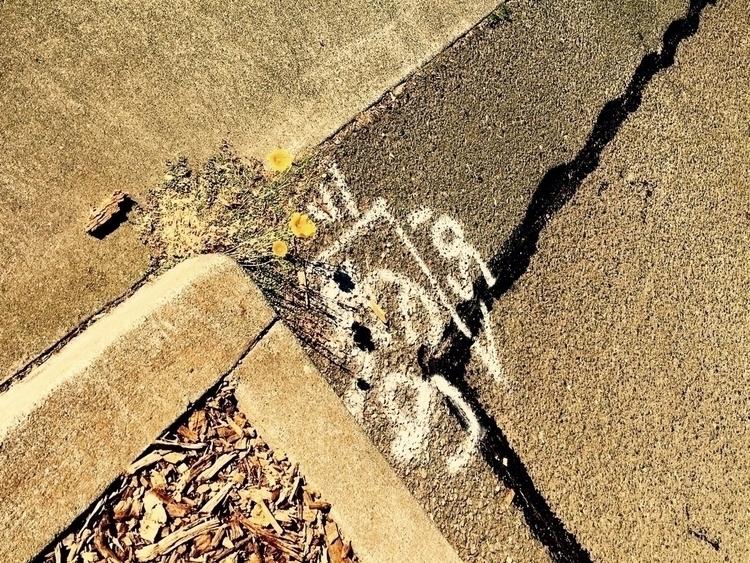 Random thoughts - pavement, poppies - katemoriarty | ello