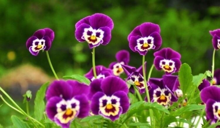 flowers Alice Wonderland?! imag - barebonesbijoux | ello