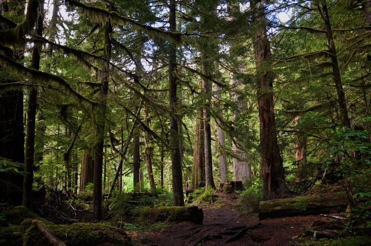 Mount Rainer National Park - ogri | ello