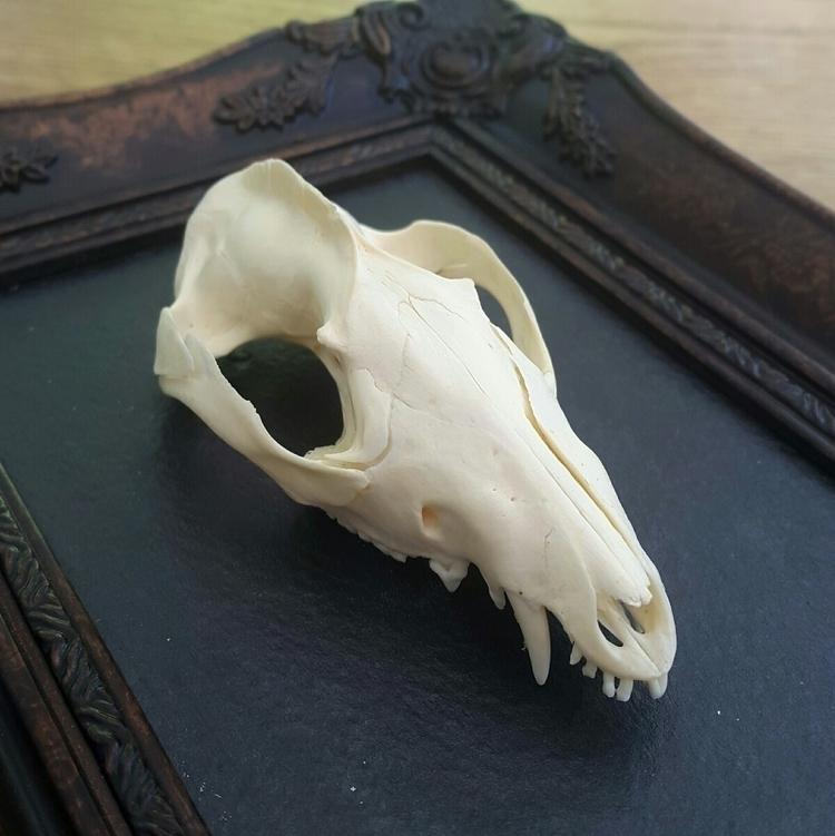 stunning quality opossum skull  - artbywolves | ello