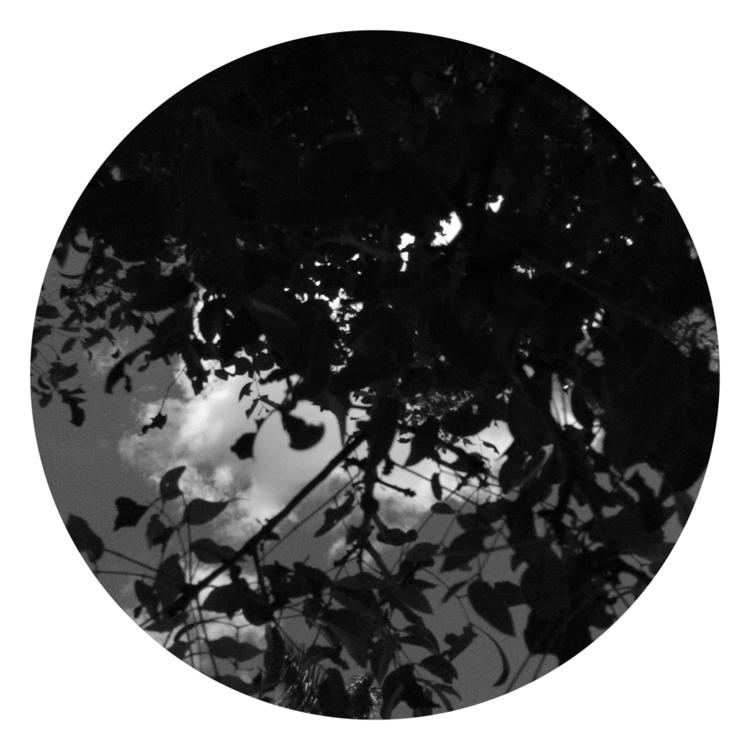 Tree Clouds Apps - mikefl99, ello - mikefl99 | ello