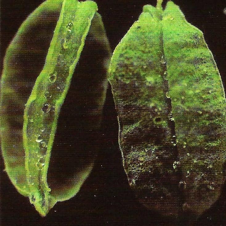 cannabis, ellocannabis, leaf - ellocannabis | ello