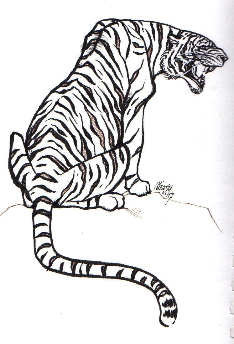 quick simple ink drawing tiger - saralutra | ello