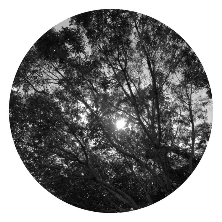 Sun Peeking Apps - mikefl99, ello - mikefl99 | ello