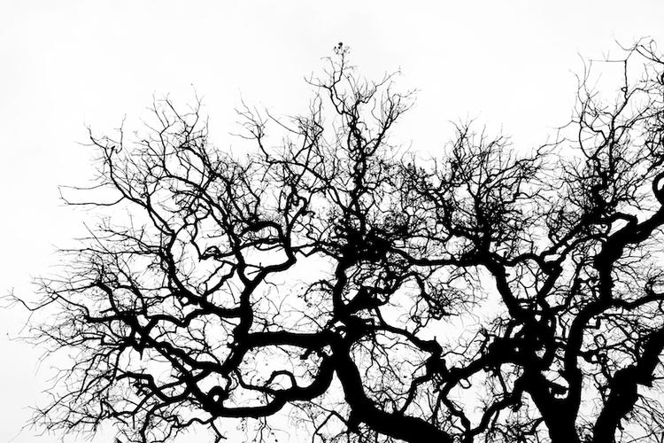 Tree Life - tree, graphic, black - zeroing   ello