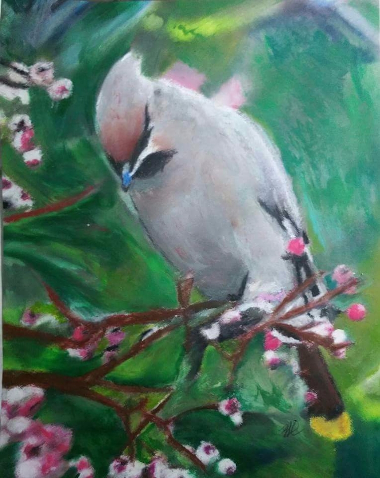 waxwings, oil pastel drawing - totallytwistedfickity | ello