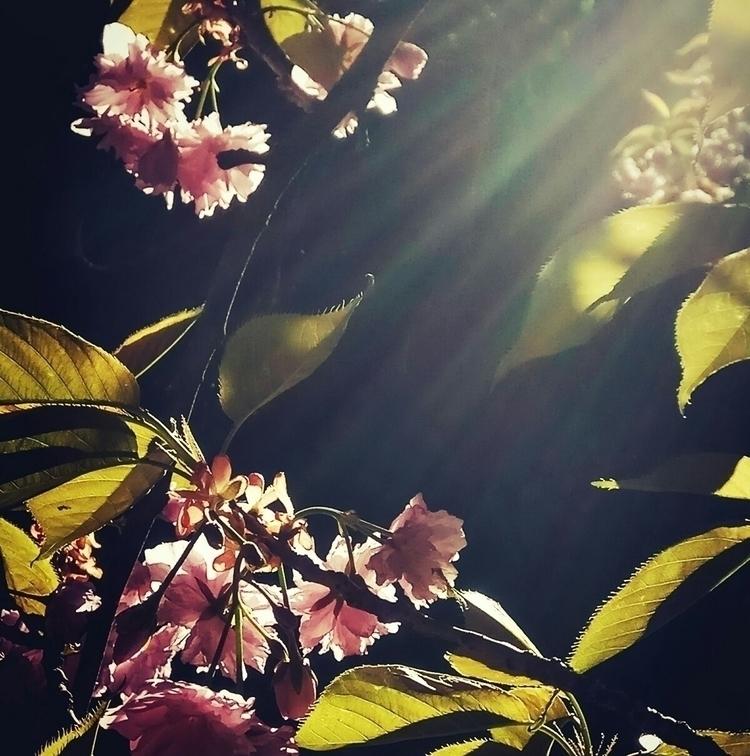 crimea, simpheropol, blossoming - kormin | ello