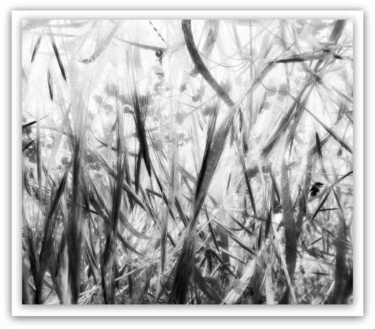 Lying Grass, 2 - photography, grass - voiceofsf | ello