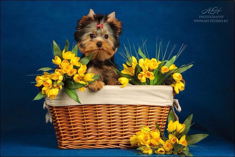buenos dias para todos!!! espec - yorkshireterriers | ello