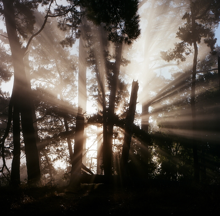 sunrays, light, fog, ellofilm - teetonka | ello