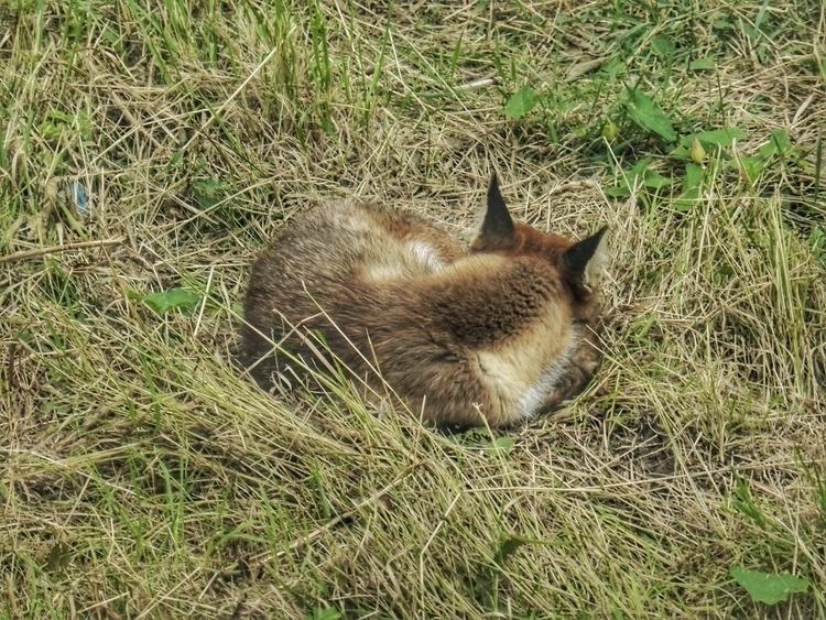 Sleeping Foxes Lie - NewTownScenes - paulbines | ello