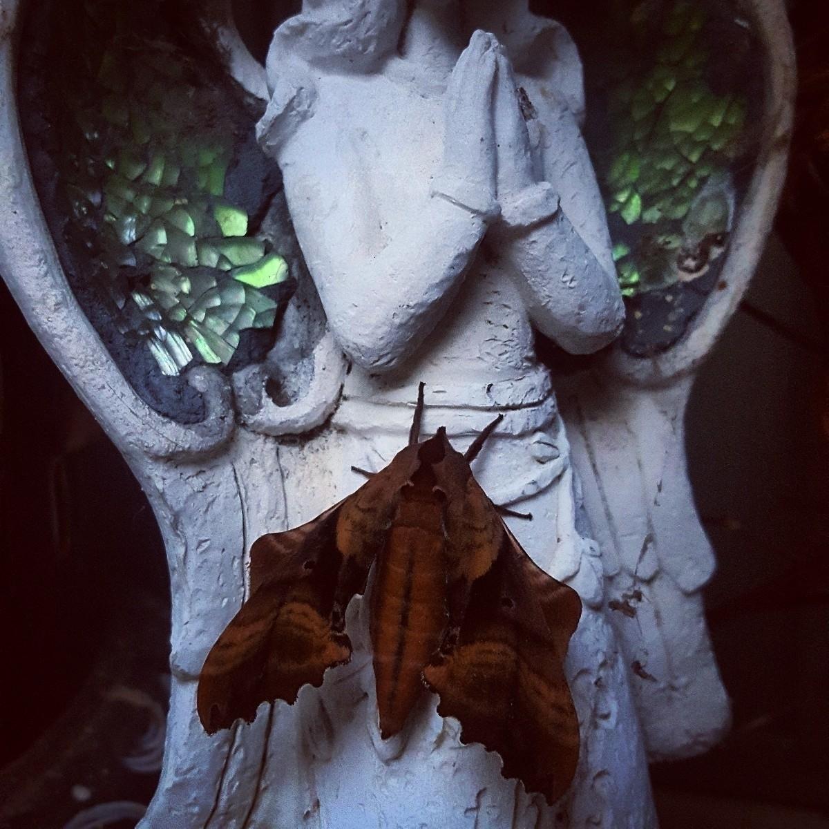 Moth flight spread magic night  - grayvervain   ello